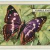 Purple Emperor.