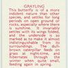 Grayling.