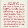 Oak Beauty.
