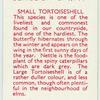 Small Tortoiseshell.