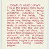 Death Head Hawk.