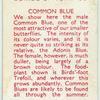 Common Blue.