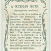 A Mexican moth & larva.