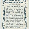 Common tiger moth & larva.