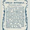 Apollo butterfly & larva.