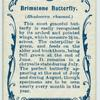 Brimstone butterfly & larva.