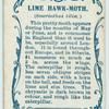 Lime hawk-moth & larva.