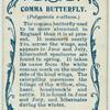 Comma butterfly & larva.