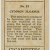 Cydimon sloanus.