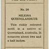 Miliona queenslandicus.