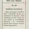 Papilio alcinous.