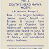 Death's head hawk-moth.