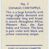 Danaus Chrysippus.