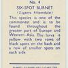 Six-spot burnet.
