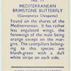Mediterranean brimstone butterfly.