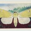 Owl moth.