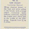 Oak eggar.