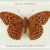 Silver-washed fritillary butterfly.