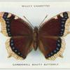 Camberwell beauty butterfly.