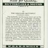 Grayling butterfly.