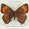Brown hairstreak butterfly.