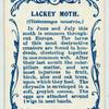 Lackey moth.