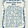 Death's-head hawk-moth.