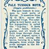 Pale tussock moth.
