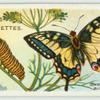 Swallow-tail butterfly.