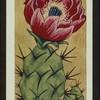 Opuntia phaeacantha.