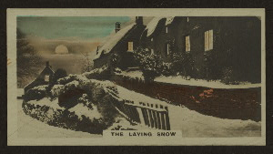 The laying snow.