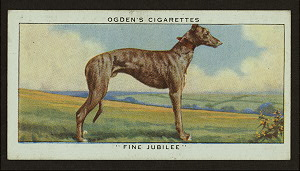 Fine Jubilee.