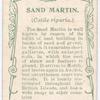 Sand martin.