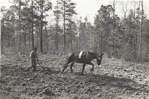 Spring plowing in cut-over region south of Marshall, Texas, April 1939.