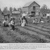 A profit of $2,723.61 on fifteen acres of strawberries; The strawberry field of an ex-slave who makes more money than the Governor of his State recieves as a salary.