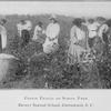 Cotton picking on school farm - Brewer Normal School, Greenwood, S.C.