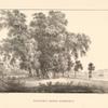 Platany bliz Buiukdere ( Vol'fensbergera)
