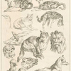 [Cats, goose, pig, lions, monkey, chickens, foxes.]