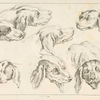 [Studies of heads of dogs.]