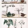 1. Graines employées  pour les colliers; 2. Végétaux pour le tatouage; 3. Plantes nutritives.