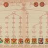 Tablitsa vyvoda familii, proiskhodiashchikh ot Glandy Kambily, s pokazaniem ikh gerbov
