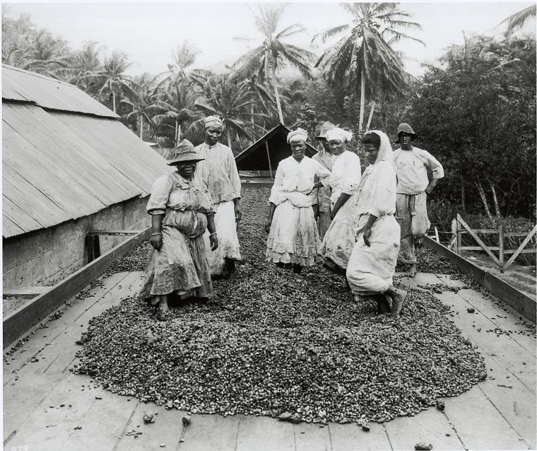 [The cocoa industry in Trinidad.]
