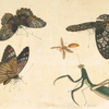 [Butterflies and insects.]