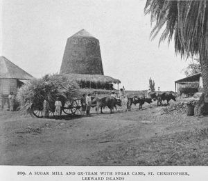 A sugar mill and ox-team with sugar cane, St. Christopher, Leeward Islands.