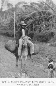 A Negro peasant returning from market, Jamaica.