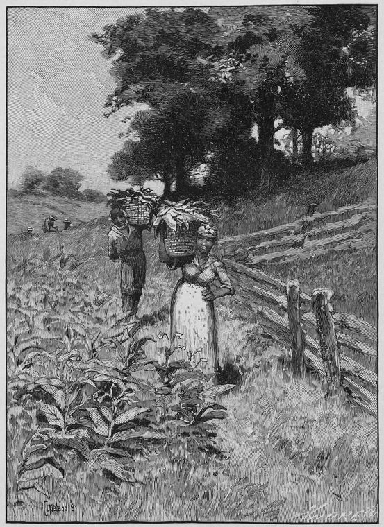 [Carrying bushels of corn.]