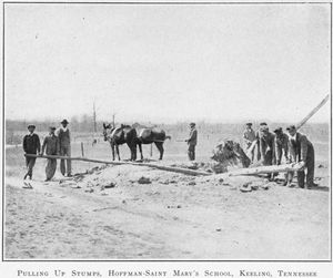Pulling up stumps; Hoffman-Saint Mary's School; Keeling, Tennessee.