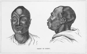 Negro of Bornu