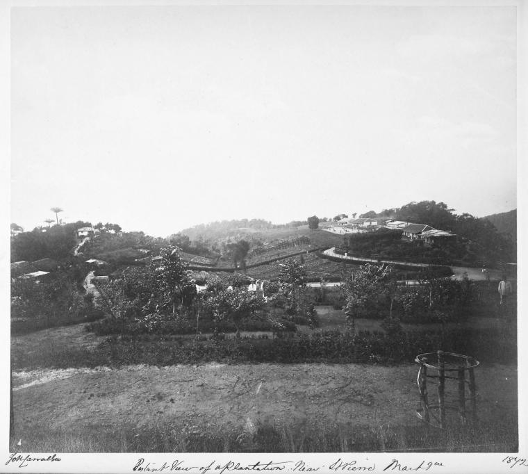 Distant view of a plantation near St. Pierre, Martinique.