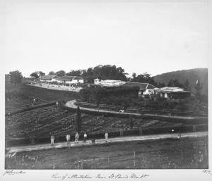 View of a plantation near St. Pierre, Martinique.